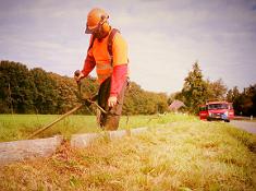bosmaaier van bodegom provincie noord holland-2